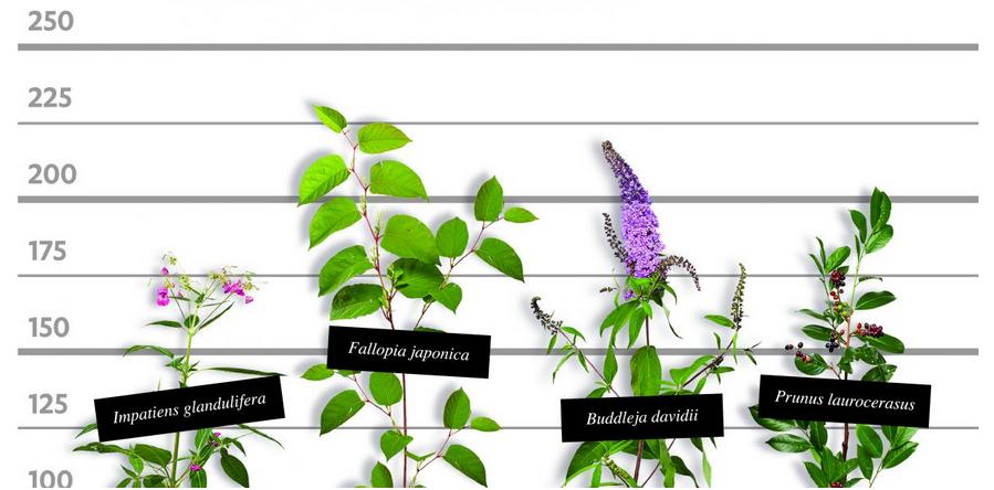Festival invazivnih rastlin